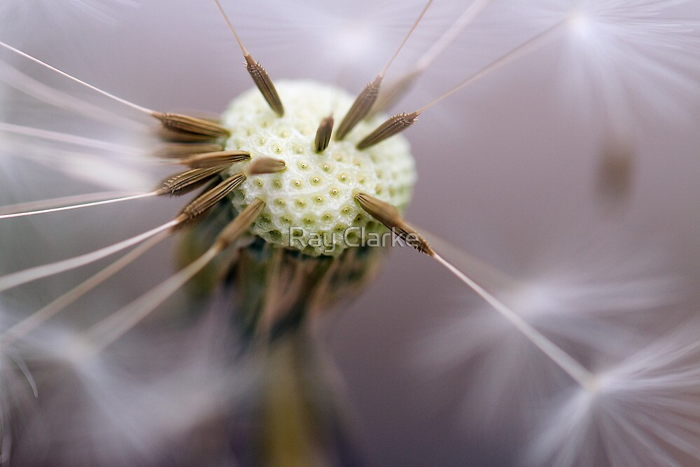 Pin Cushion by Ray Clarke