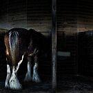 in the stalls by carol brandt