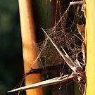 Very abstract spider Web by Luís Lajas
