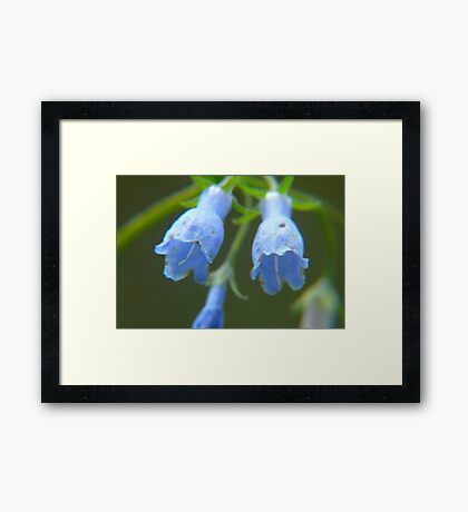 Twin Bells Framed Print