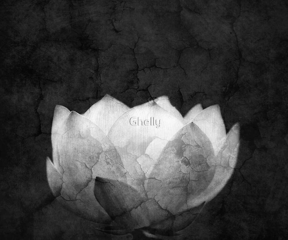 Lotus Projection by Ghelly