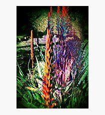 3649 Aloe Photographic Print