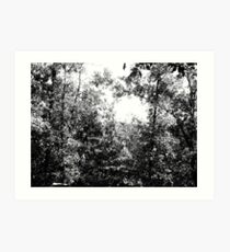 Tree Skech Art Print