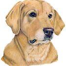 Labrador retriever - yellow - P by doggyshop