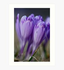 1093 . Crocus sativus . God bless you each and every day with much love and Joy and wonderful inside and out !! Art Print