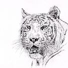 White Tiger by Hannah Taylor