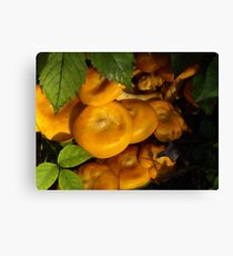Orange Mushrooms ~ Jack O' Lantern Canvas Print