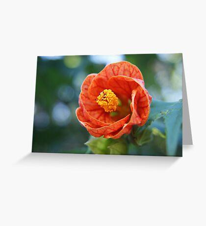 Bright Orange Lantern Greeting Card