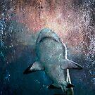 Tiger Shark by Victoria DeMore