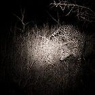 Leopard by night by Neil Messenger