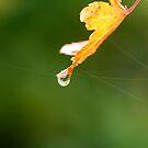 Nature's wonders by Sangeeta