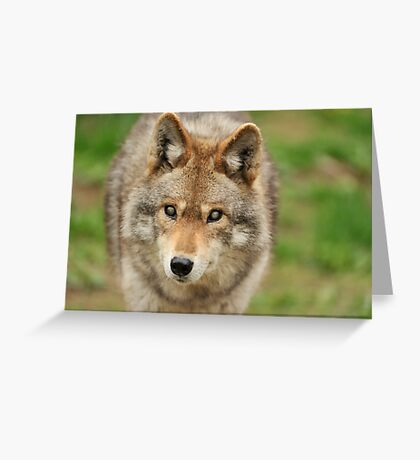 Smokey the Coyote Greeting Card
