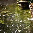 Big Cat in Water by Daniel Wills