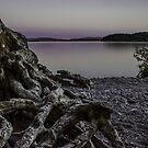 The Roots of Loch Lomond by joak