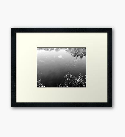 Life in the Lake B&W Framed Print
