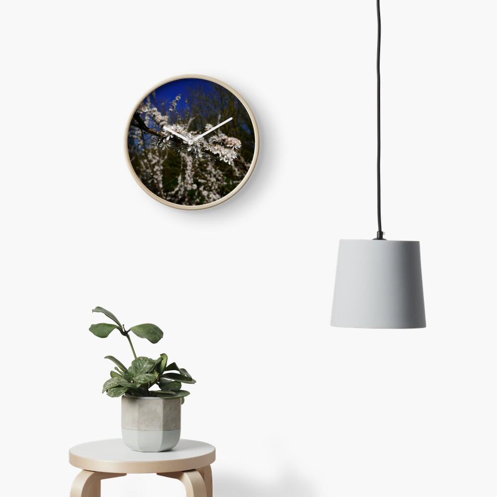 Blackthorn (Prunus spinosa) Clock