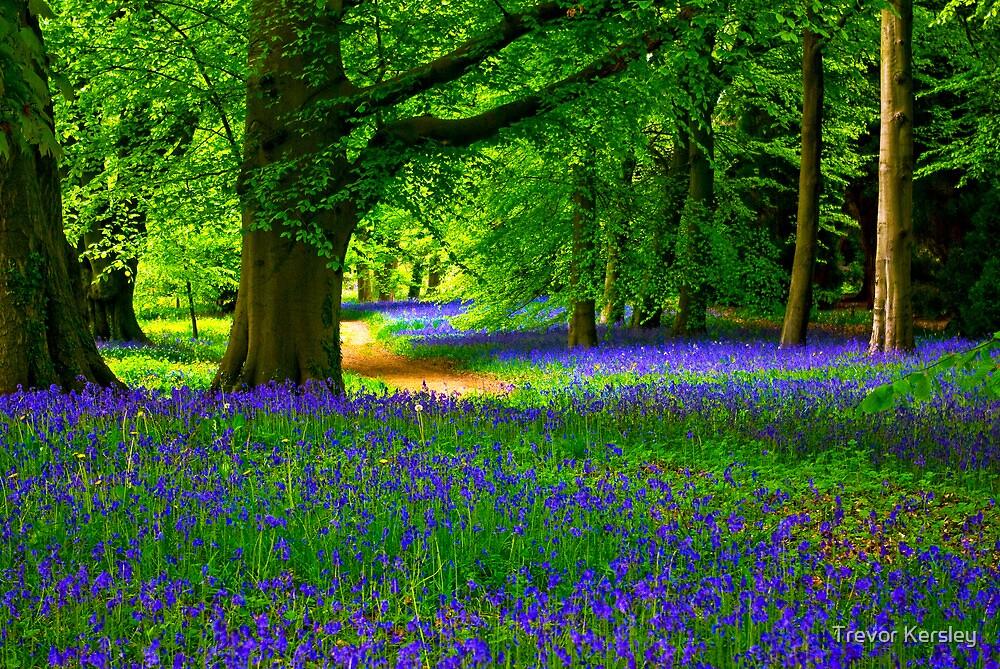 Bluebell Wood - Thorpe Perrow #3 by Trevor Kersley
