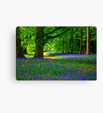 Bluebell Wood - Thorpe Perrow #3 Canvas Print