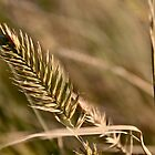 Autumn Grasses by Linda Bianic