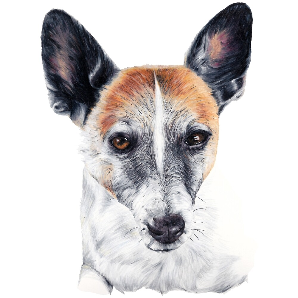 Jack Russell Chalky by Apatche Revealed