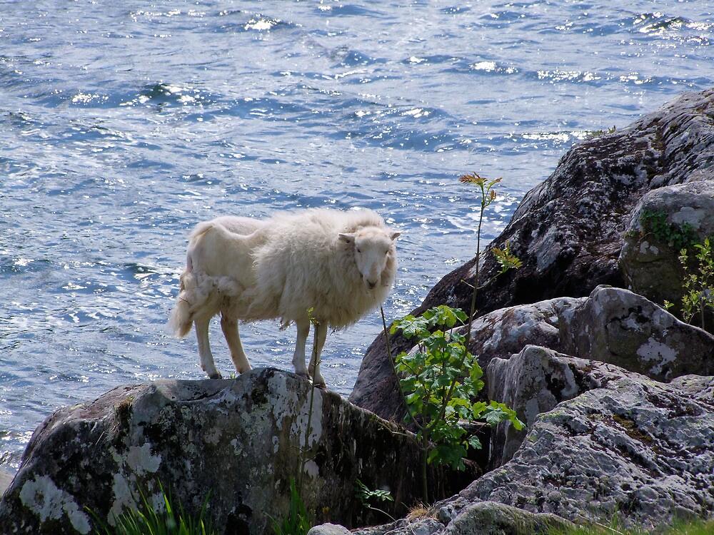Lamb shanks Snowdonia by leunig