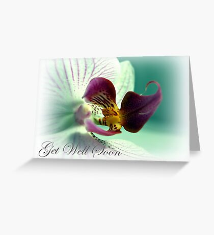Phalaenopsis  Orchid Get Well Card Greeting Card