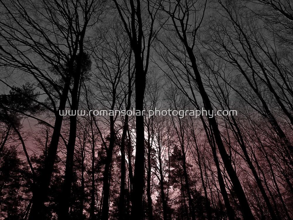 silent witness by www.romansolar photography.com