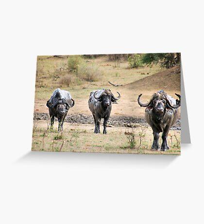 AFRICAN BUFFALO - Syncerus caffir Greeting Card