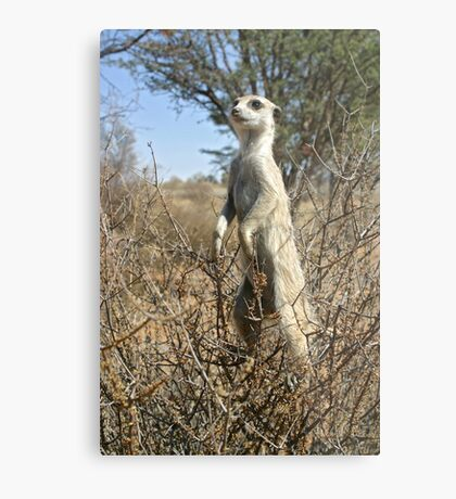Meerkats in high places Metal Print