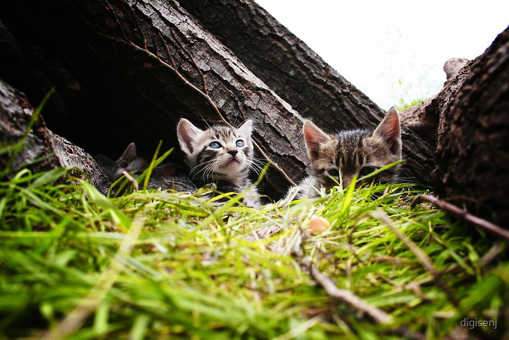 Kittens by digisenj