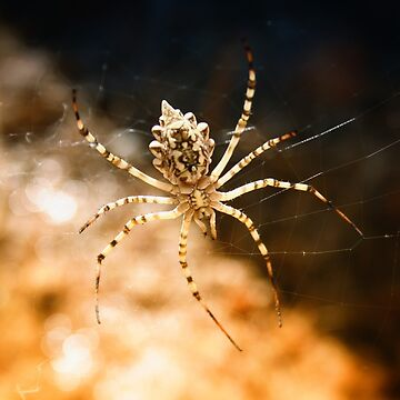 Spider by digisenj