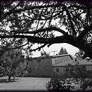 Barns thru the Trees by Debbie Robbins