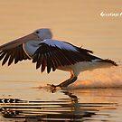 Sunset Landing by helmutk