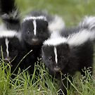 Oh Cool...Baby Black And White Foxes :-)  by Gary Fairhead