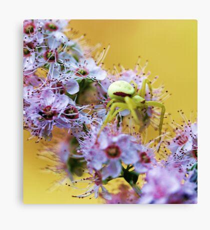Pink Wildflower - Yellow Spider Canvas Print