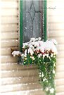 Snow Covered Flowers by Yannik Hay
