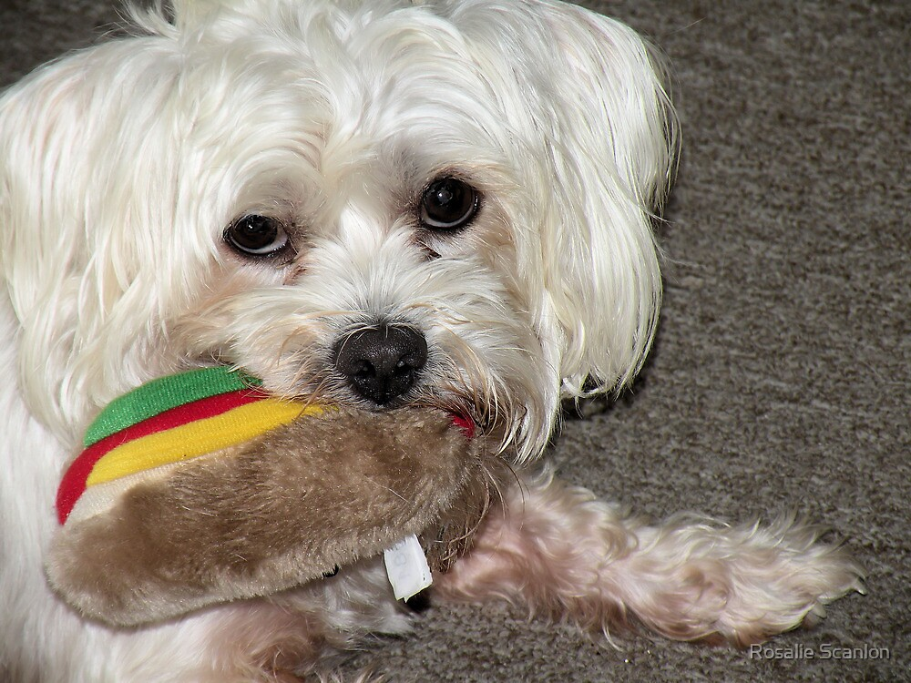Oscar has a Hot Dog       by Rosalie Scanlon