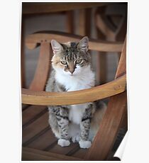 Adorable Tabby Cat Poster