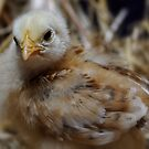 Hot Chick by Heather Haderly