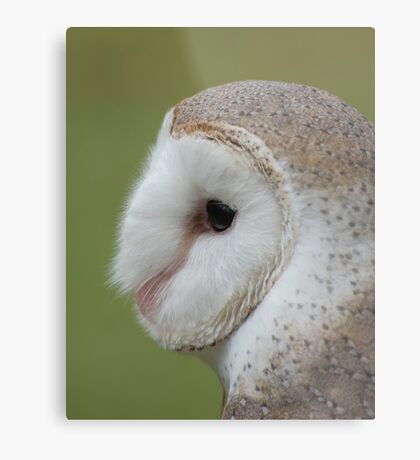Fluffy face - barn owl profile Metal Print