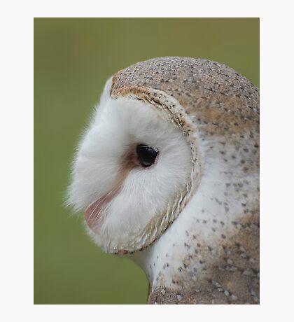 Fluffy face - barn owl profile Photographic Print