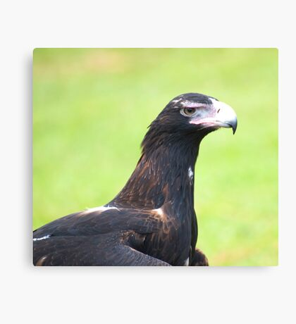 Grumpy face - wedge tailed eagle Canvas Print