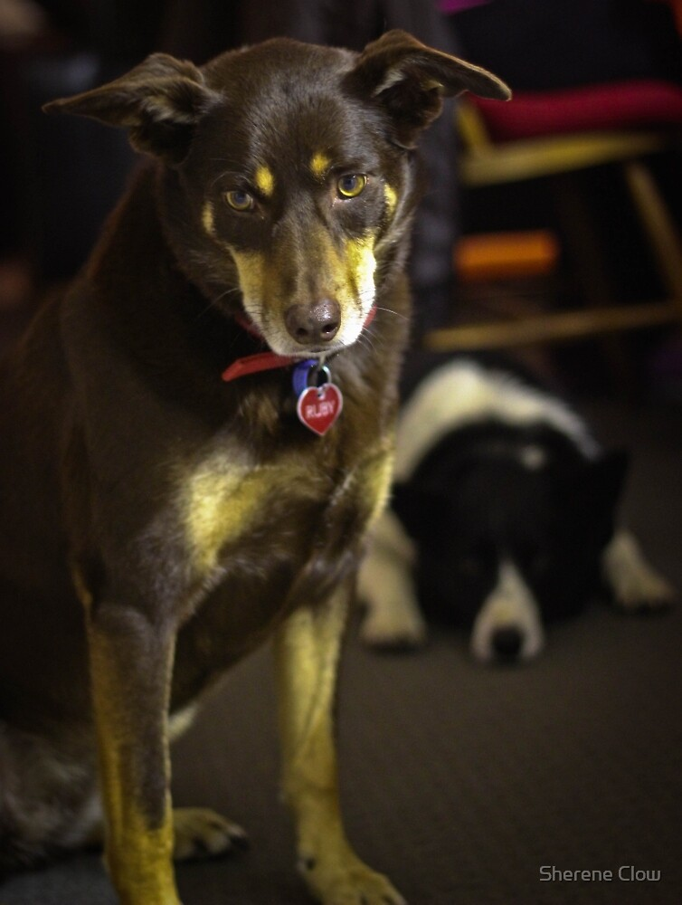 Colour Ruby and Baxter by Sherene Clow