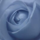 Adorable Light Blue Rose by hurmerinta