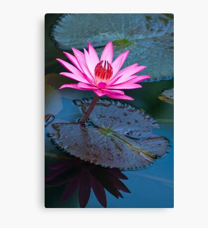 Reflections - pink waterlilly  Canvas Print