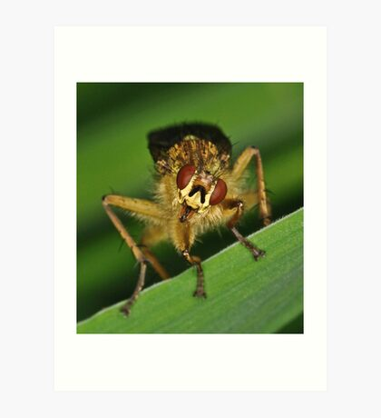 Puzzled Fly Art Print