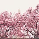 Cherry Blossoms - Central Park - New York City by Vivienne Gucwa