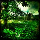 Nunnington Hall, Wild Gardens by Lucy Martin