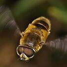 Fly Past by Gareth Jones