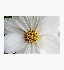 Flora macro Photographic Print